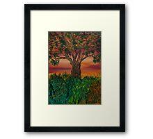 Bottle Brush Tree at sunset Framed Print