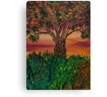 Bottle Brush Tree at sunset Canvas Print