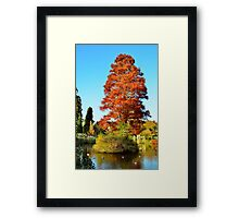Tree and Lake Framed Print