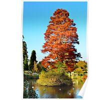 Tree and Lake Poster