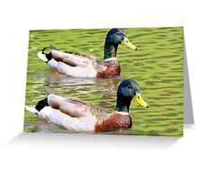 Synchronized Swimming Duck Duet  Greeting Card