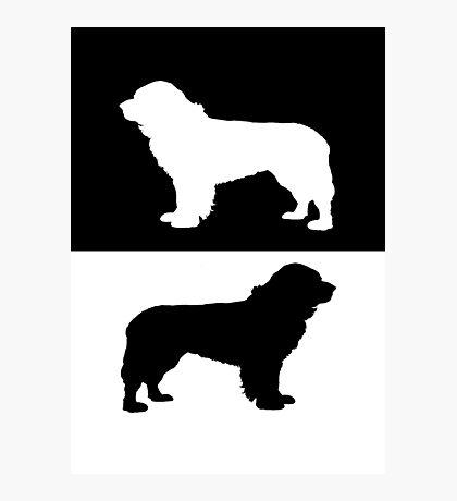 Newfoundland dog Photographic Print