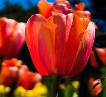 Glowing Orange by Tina Hailey