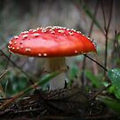 toadstool by BlaizerB