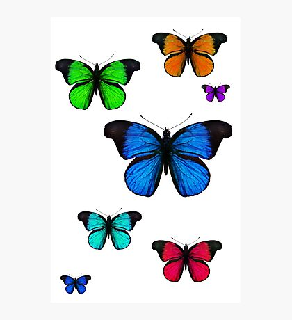 rainbow butterflies Photographic Print