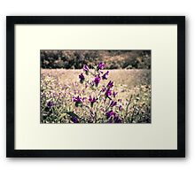 Field of purple flowers Framed Print