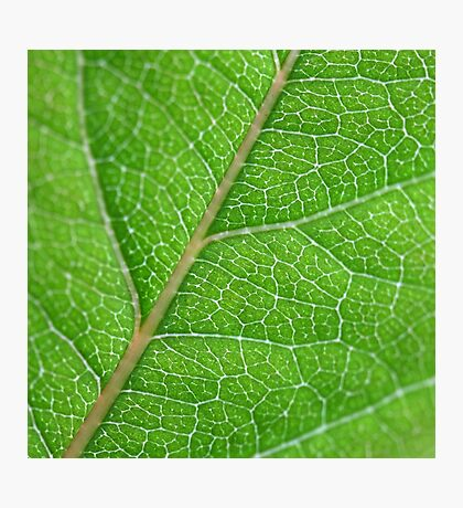 leafy greens Photographic Print