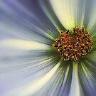 The Jewel ! by Elfriede Fulda