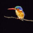 kingfisher by BlaizerB