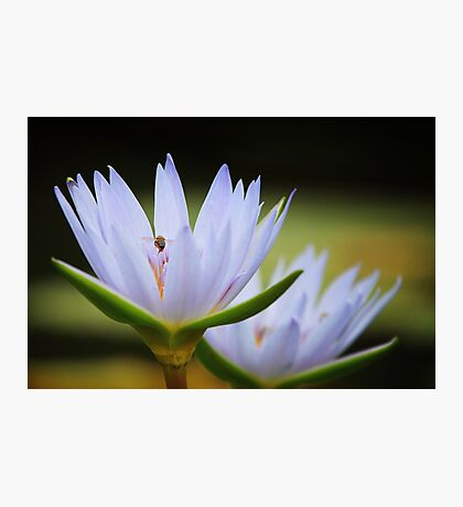 Among the lilies Photographic Print
