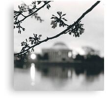 Cherry Blossoms at the DC Tidal Basin Canvas Print