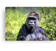 Old Gorilla IV Canvas Print