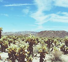 Cholla Forest by Kat Smith