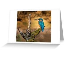 Kingfisher on branch Greeting Card