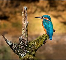Kingfisher on branch Photographic Print