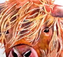Highland Cow 2 Sticker