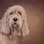 Shaggy Dog by Patricia Jacobs DPAGB LRPS BPE4