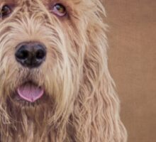 Shaggy Dog Sticker