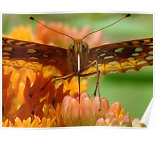Great Spangled Fritillary Portrait Poster