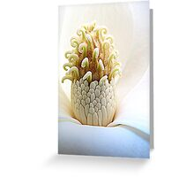 Prize Of Magnolia Greeting Card
