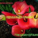 Glory of Summer Challenge Winner Banner by BlueMoonRose