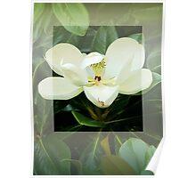 Magnolia Flower Poster