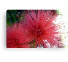 Bottle brush up close Canvas Print
