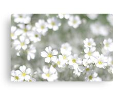 white spring flowers field  Canvas Print