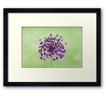 Spring flower macro isolated on green meadow background Framed Print