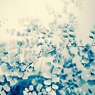 fern study by natalie angus
