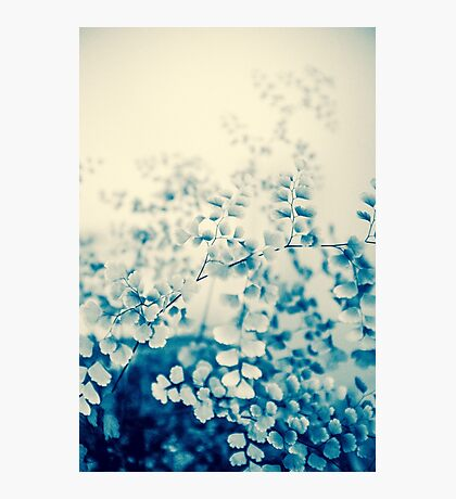 fern study Photographic Print