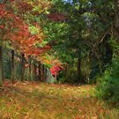 Down a Country Lane - Mt Wilson - Painted - The HDR Experience by Philip Johnson