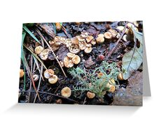 Bird's Nest Cup Fungus Greeting Card