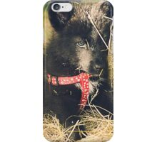 Pup in the Hay iPhone Case/Skin