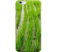 Rice Shoots 1 iPhone Case/Skin