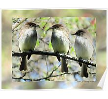 Little Brown Birds Of Spring Poster