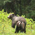 Soaked bear family by zumi