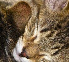 Sleepy Kittens Sticker