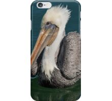 Brown Pelican With White Head Plumage iPhone Case/Skin