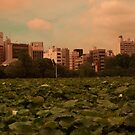 Lilly Pads in Tokyo by Christian Eccleston