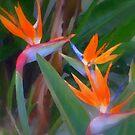 Birds of Paradise by Dana Roper