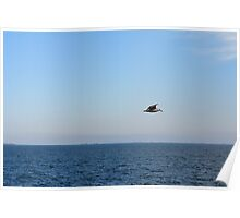 Seagull in flight and the blue sea and calm sky. Poster
