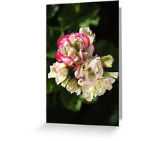 Geranium Soft White and Pink Greeting Card