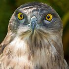 Snake Eagle 2 by Shaun Colin Bell