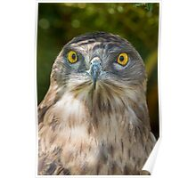 Snake Eagle 2 Poster