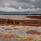 Coorong #3 by Bette Devine