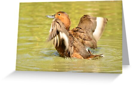 time to splash out (female mallard duck) by Stephen Frost