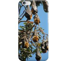 Grey-headed Flying-fox iPhone Case/Skin