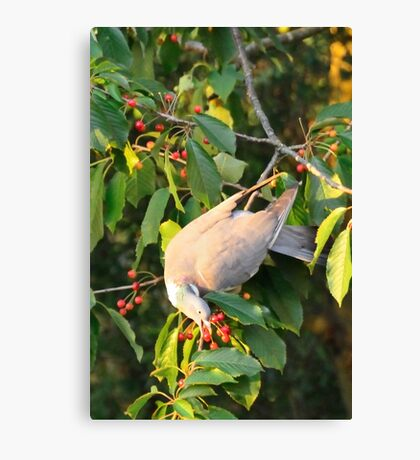 hanging around for a treat Canvas Print
