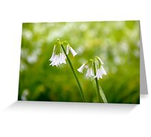 White petals on a day in spring Greeting Card